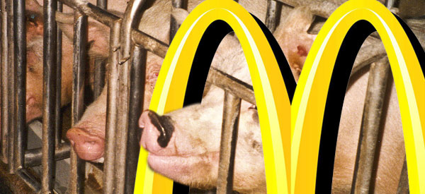 You Won't Believe What Pork Producers Do to Pregnant Pigs